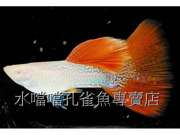 水噹噹005