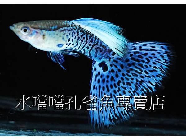 水噹噹002