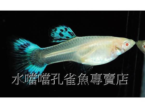 水噹噹004