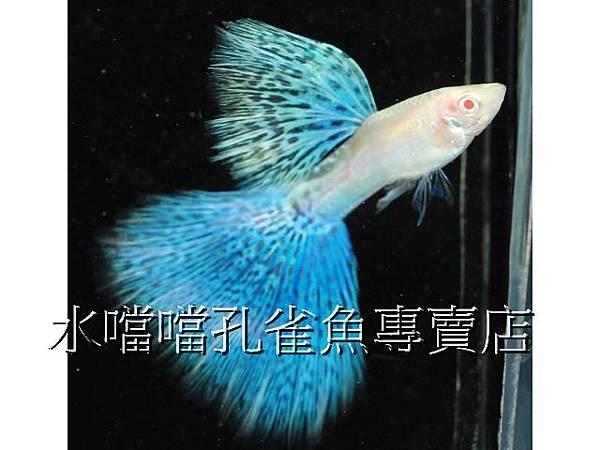 水噹噹007