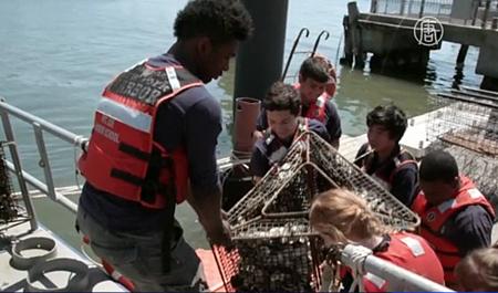 紐約億萬牡蠣計劃 青少年建環保意識