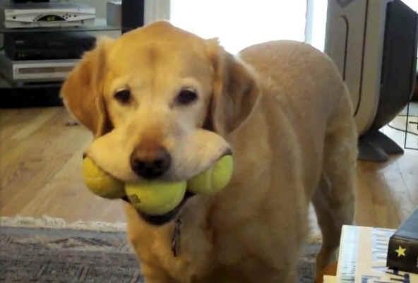 Zoe可以一次咬住三顆網球