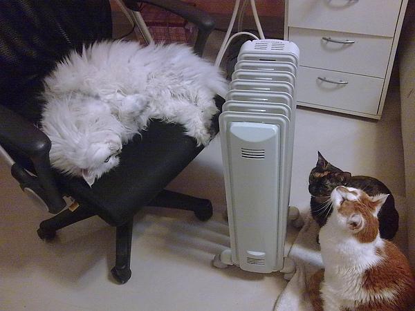 三喵取暖.jpg