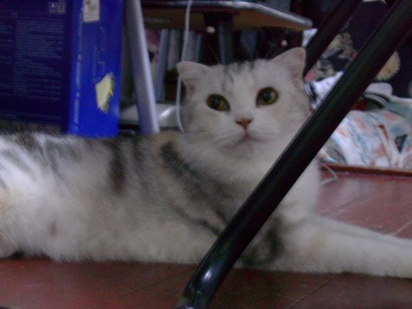 Wendy的喵喵