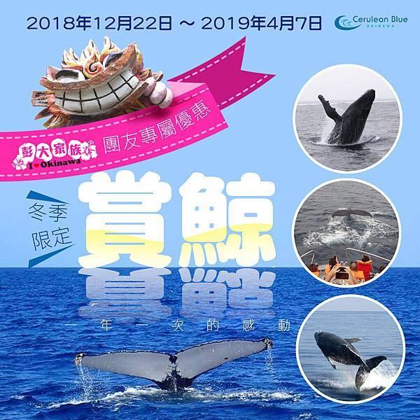 2019沖繩賞鯨行程.jpg