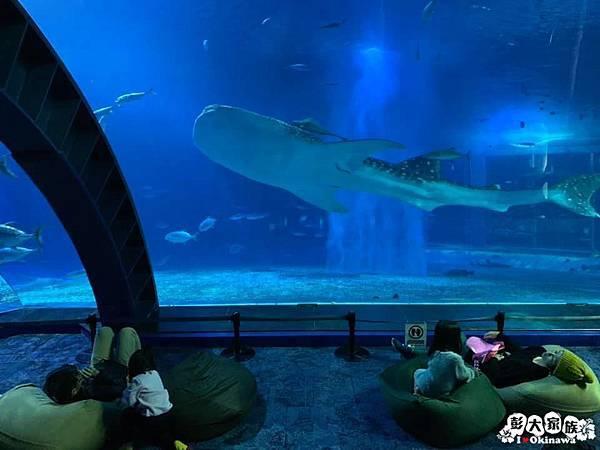 【沖繩景點】冬季限定 夜間海洋館