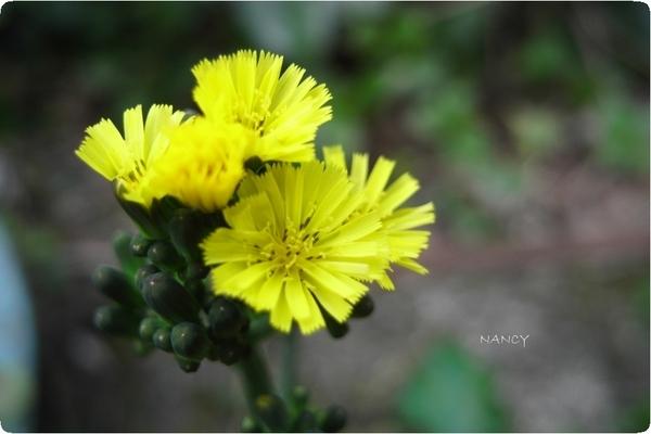 小小的花。.jpg