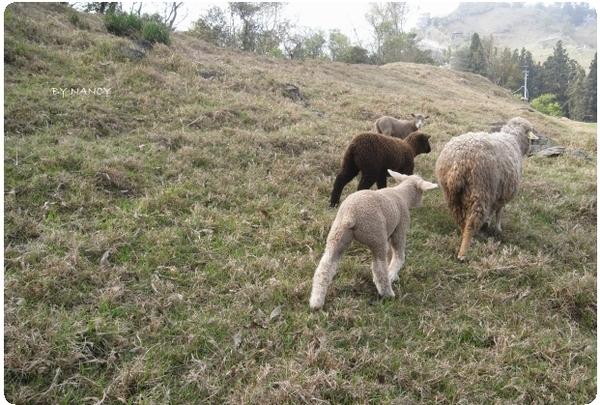 小小羊兒要回家.jpg