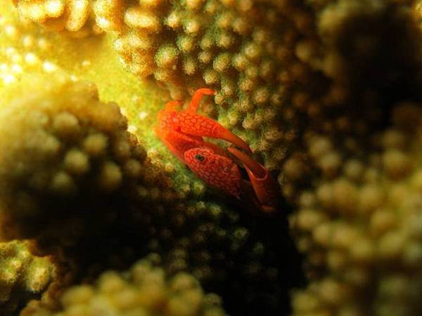 night-dive2_171109_0007-640x480.jpg