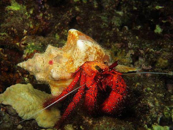 night-dive2_171109_0040-640x480.jpg