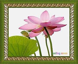 相框中的蓮花.jpg