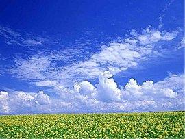 藍天白雲.黃花綠草.jpg