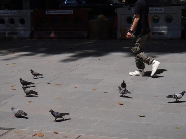 10/25 滿街的鴿子
