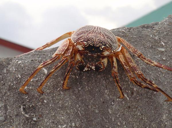 10/26 這是完整的蟹殼