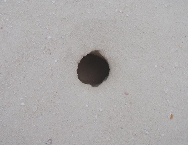 10/26 螃蟹挖出來的大洞