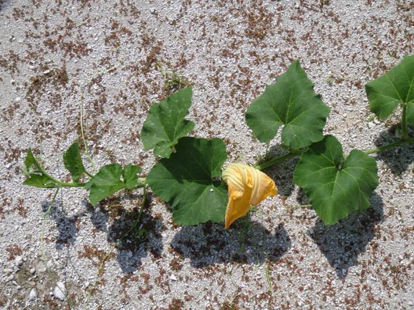 10/27 這植物很眼熟