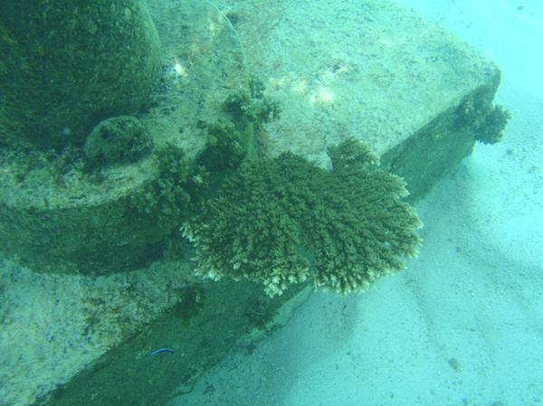 10/27 很危險的珊瑚礁QQ