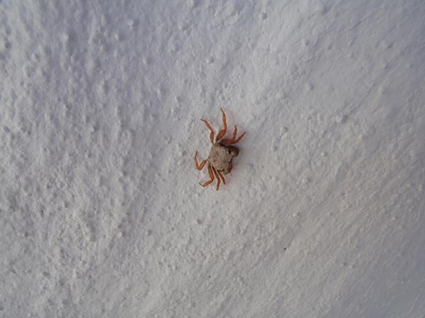 10/28 島上很多寄居蟹