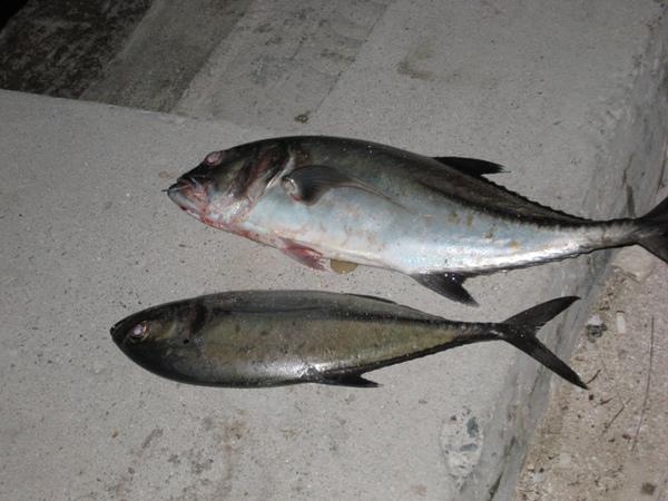 10/28 碼頭邊的漁獲