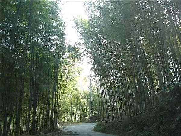 好美的竹林小徑