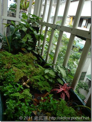 窗台的小水池