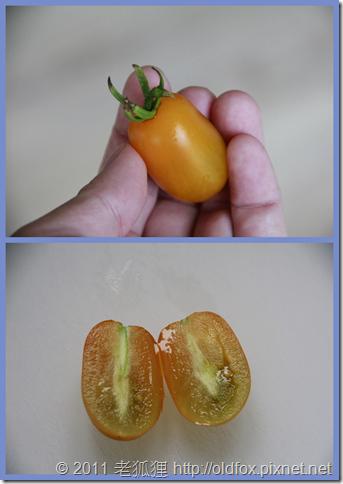 黃金小蕃茄