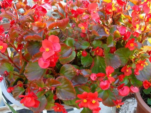 25453678:冬日的庭院