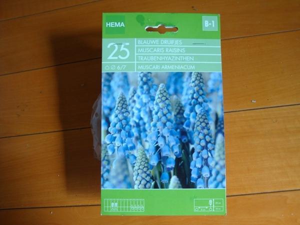 25498122:葡萄風信子的開花記