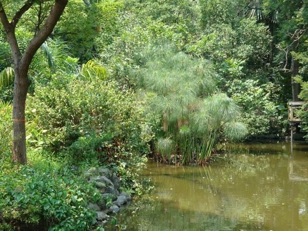 25500295:植物園的回味