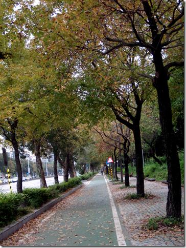 大安森林公園新生南路側的人行道