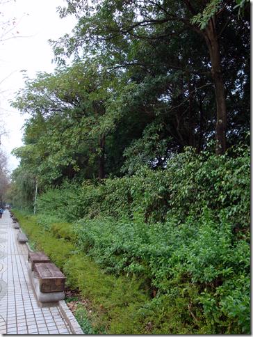 大安森林公園的樹籬