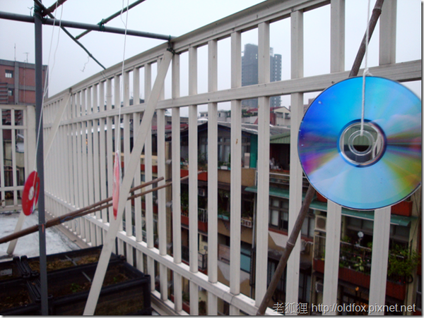 菜園裡的光碟