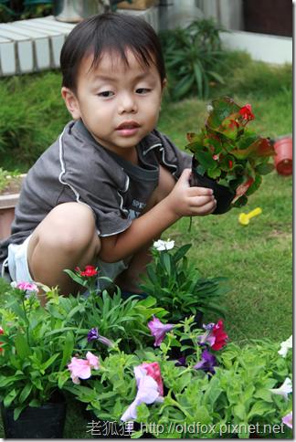 小罡幫忙種花