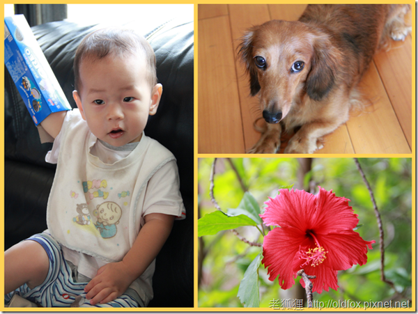 小雍、菲菲與朱槿花