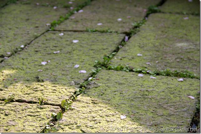 苔痕上階綠
