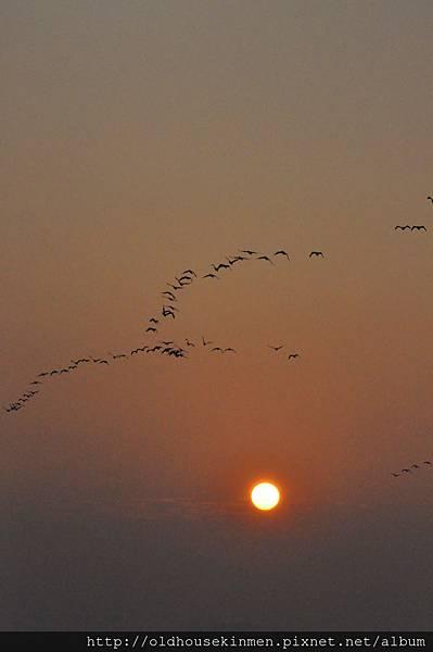 夕陽鸕鶿2