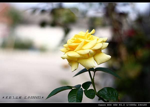 50-1.8Ⅱ練拍花卉