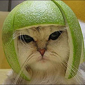 cat柚子