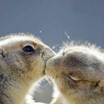 松鼠相親相愛