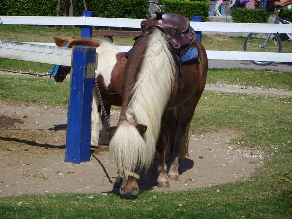 長髮飄逸的馬