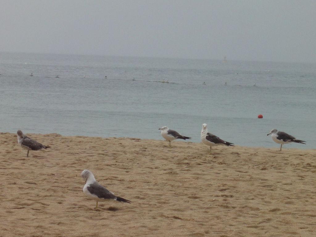 海灘上的海鷗
