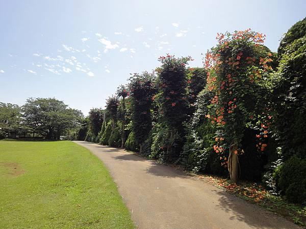 アイランドパークIsland Park