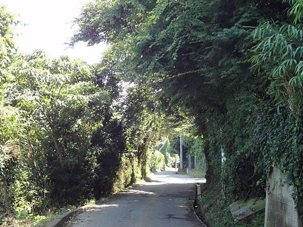 櫻道散策路