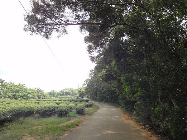 銅鑼自行車道