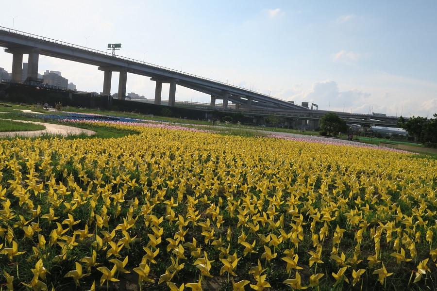 板橋蝴蝶公園風車花海