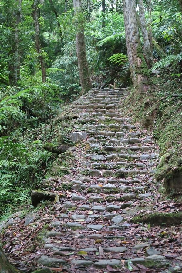 金瓜寮溪觀魚蕨類步道