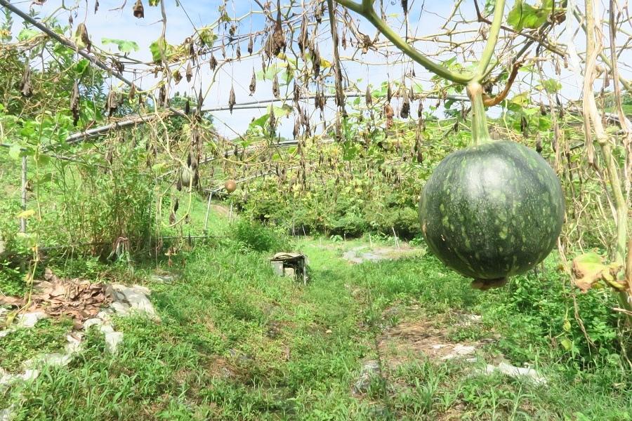慈音休閒農莊