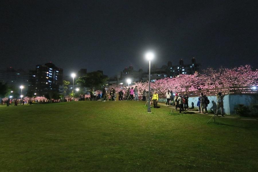 樂活夜櫻季