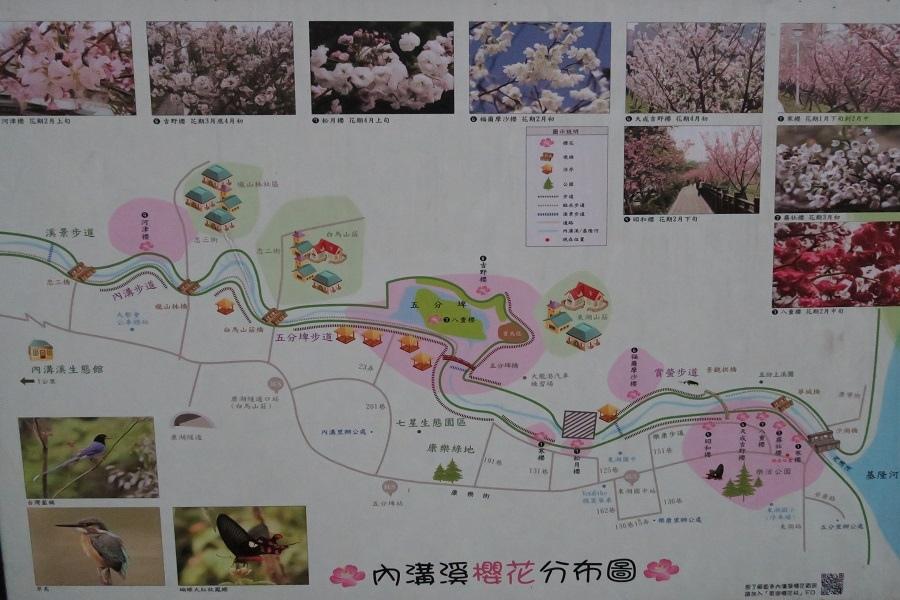內溝溪櫻花分佈圖