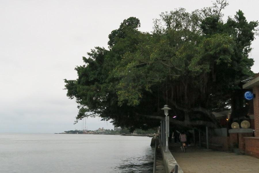 淡水榕樹道